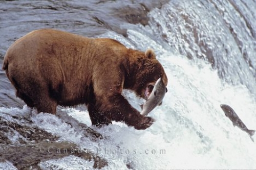 Photo: Salmon Fishing Alaska