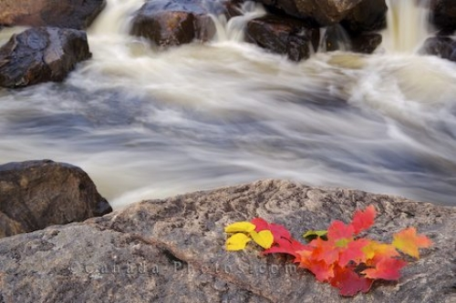 Photo: Sand River Autumn Leaves Lake Superior Provincial Park