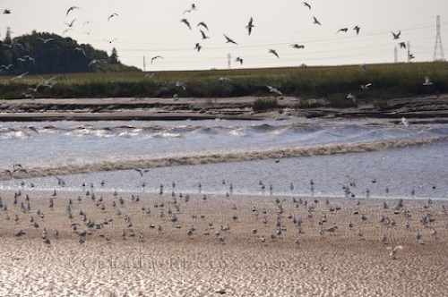 Photo: Tidal Bore Birds Nova Scotia