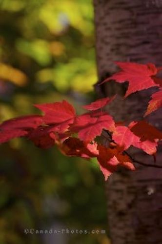 Photo: Autumn Tree Leaves Algonquin Provincial Park