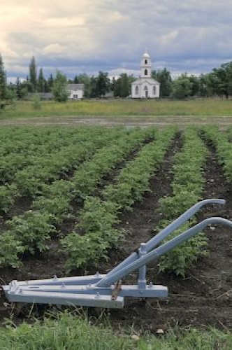 Photo: Vegetable Garden Upper Canada Village