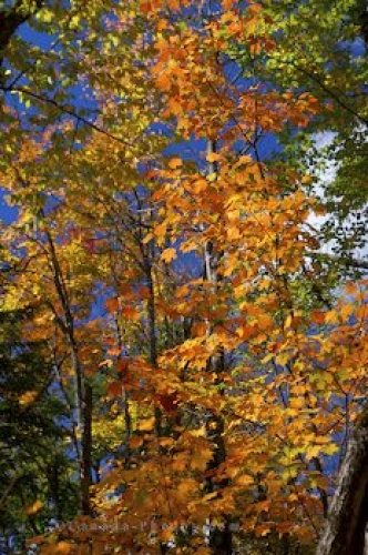 Photo: Vibrant Colored Autumn Trees Algonquin Provincial Park
