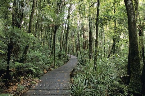 Photo: Waipoua Forest Boardwalk New Zealand