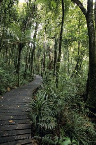 Photo: Waipoua Forest New Zealand