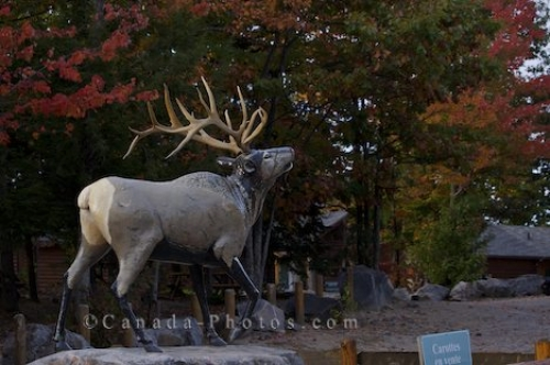 Photo: Wapiti Statue Parc Omega Montebello Quebec
