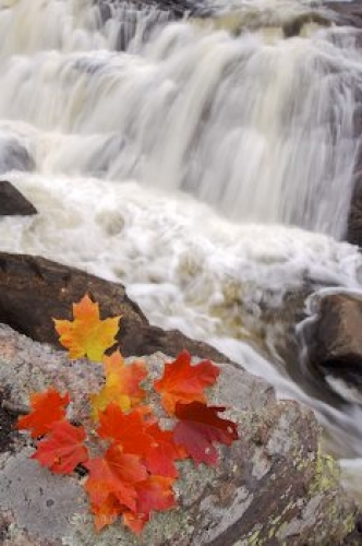 Photo: Waterfall Autumn Leaves Sand River Ontario