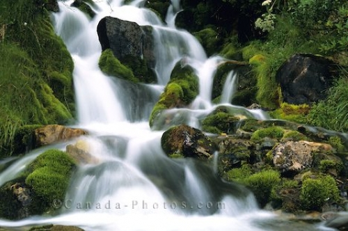Photo: Waterfalls Banff National Park Moss