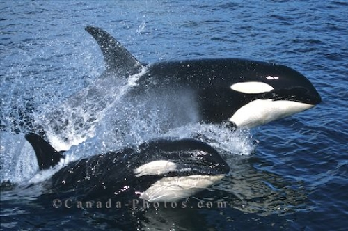 Photo: Whale Watching In BC Canada