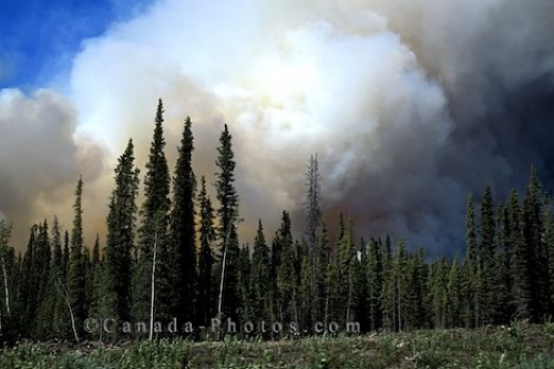 Photo: Wildland Fire Yukon