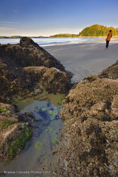 Photo: Female Tourist Beachcombing Sea Anemones Tofino