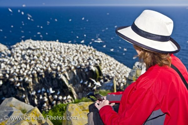 Photo: Bird Watching Northern Gannet Colony Newfoundland