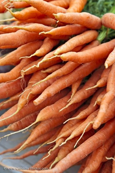 Photo: Picture of Carrots