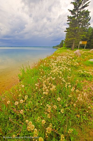 Photo: Clear Lake Shoreline Riding Mountain National Park Manitoba