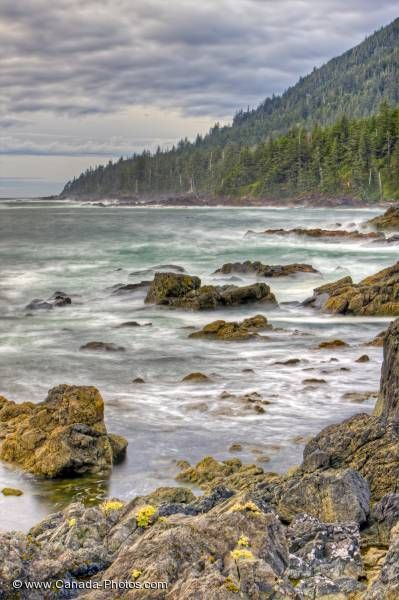 Photo: Forest Fringed West Coast Northern Vancouver Island