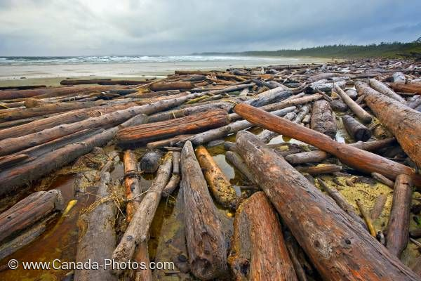 Photo: Driftwood Scenic Nature Beach Pacific Rim National Park