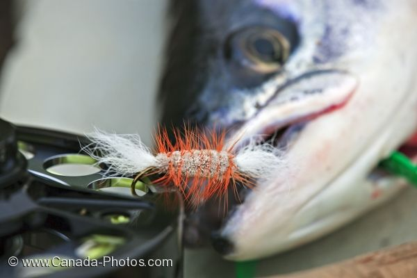 Photo: Fish Eye Atlantic Salmon
