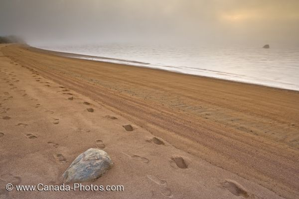 Photo: Footprints Sand Labrador