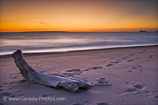 Photo: Lake Superior Beach Driftwood Ontario Canada