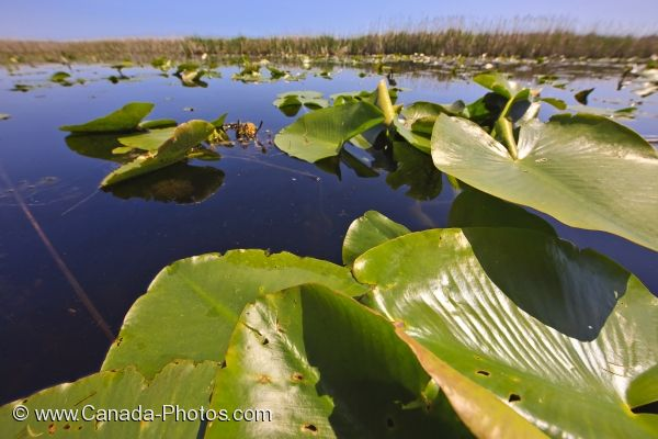 Photo: Marsh Growth Point Pelee National Park Boardwalk