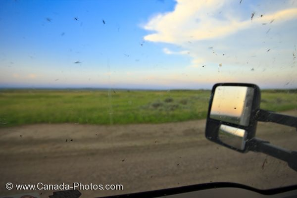 Photo: Mosquito Swarm Truck Window Frenchman River Valley Ecotour
