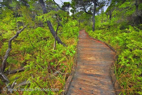 Photo: Nature Path Bog Trail Pacific Rim National Park Vancouver Island