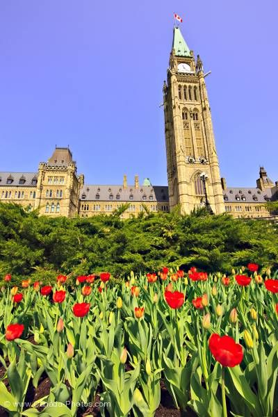 Photo: Tulip Parliament Buildings Parliament Hill Ottawa