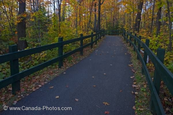 Photo: Paved Trail Fall Forest La Mauricie National Park