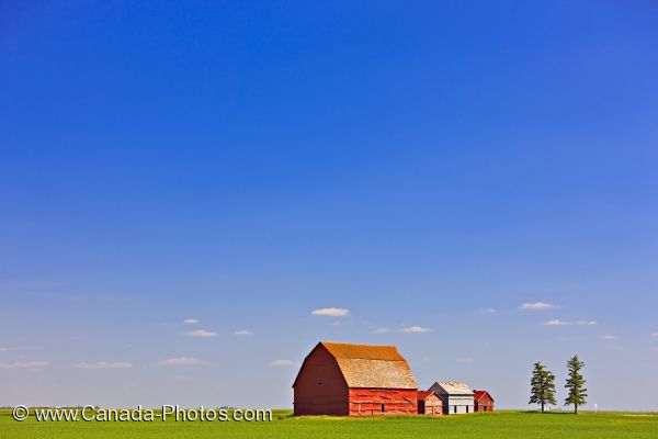 Photo: Red Barns Flat Field Prairie Saskatchewan