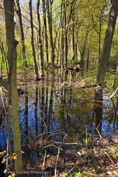 Photo: Swamp Reflections Woodland Trail Point Pelee National Park