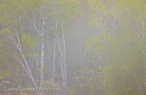 Photo: Art Photo Sinclair Cove Trees In Fog