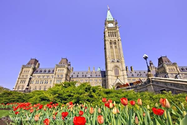 Photo: Tulips Parliament Hill Government Buildings City of Ottawa
