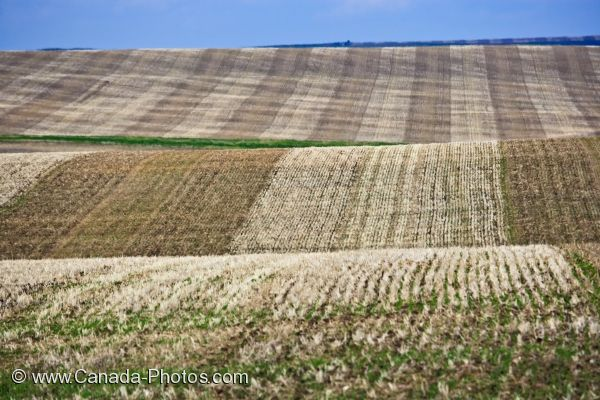 Photo: Wheat Farming Alberta
